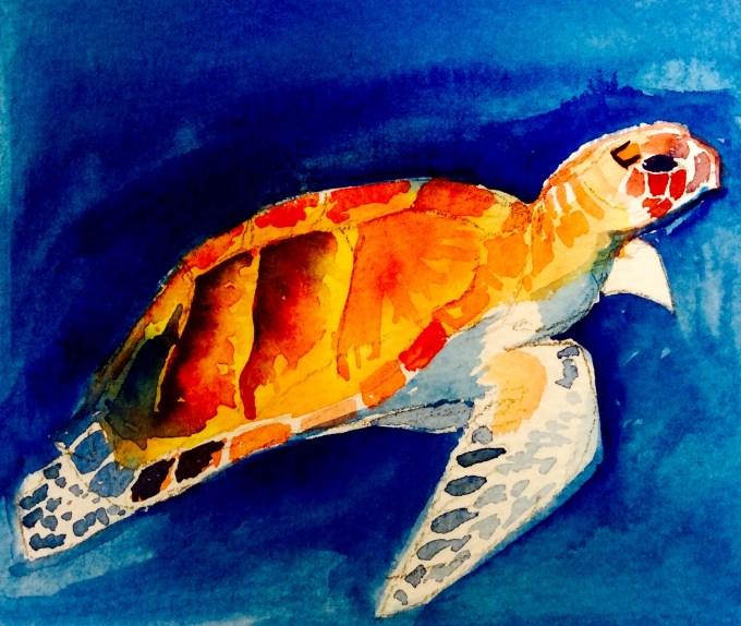 Turtle, Watercolour, 12x 17cm