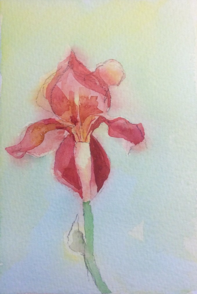 Iris III, Watercolour, 11 x15 cm