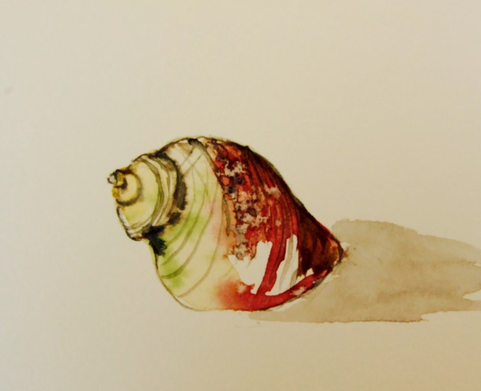 Shell, watercolour 12 x 15 cm