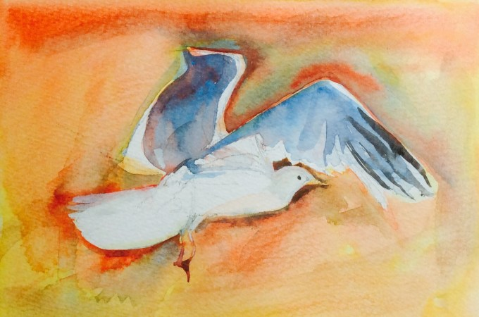 Gull in Flight, watercolour and Gouache, 17 x 12 cm