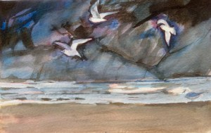 Gulls, New Polzeath, Watercolour and Gouache. 12 x 17cm