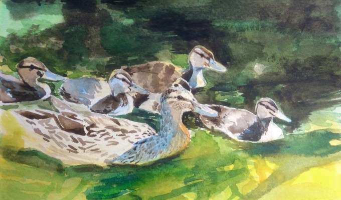 Selected Painting for Society of Wildlife Artists Annual Exhibition 29th October-November 8th 2015