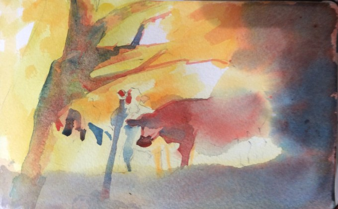 Cattle Emerging, watercolour sketch.
