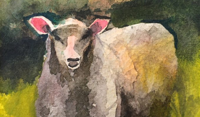 October Sheep