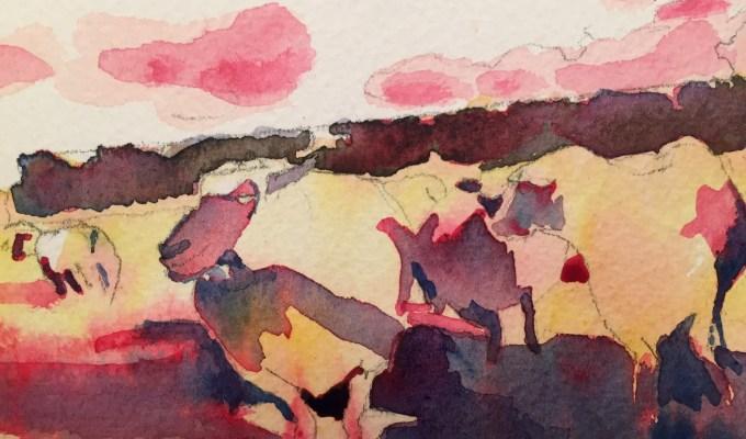 Sheep, late November