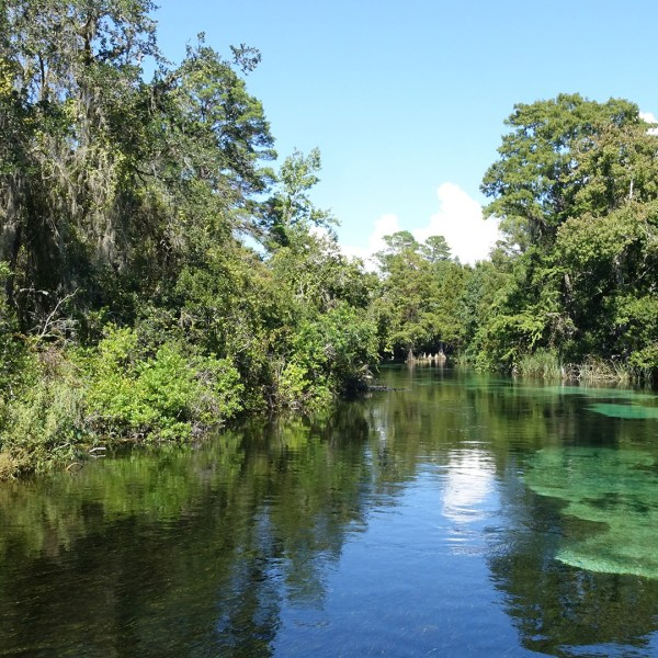 Photos from the Weeki Wachee River and Springs State Park (Florida)