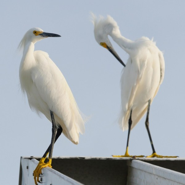 Egrets, I've Had A Few