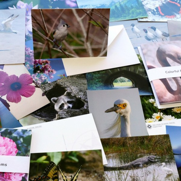 Shiny New Nature Photo Postcards + Satiny Folded Greeting Cards