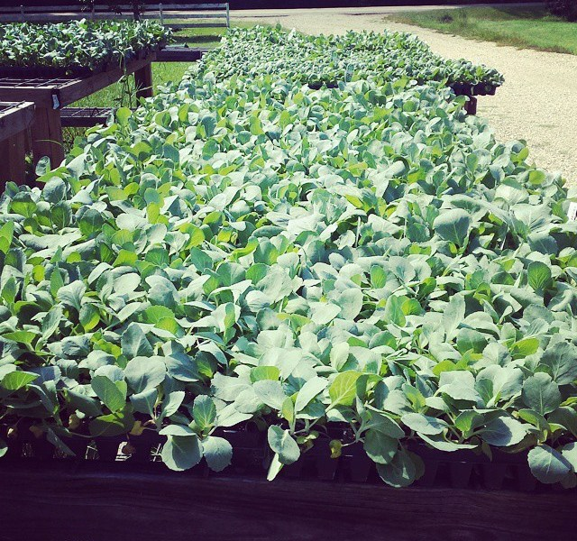 Luckett Farms CSA Fall 2014 Season Begins