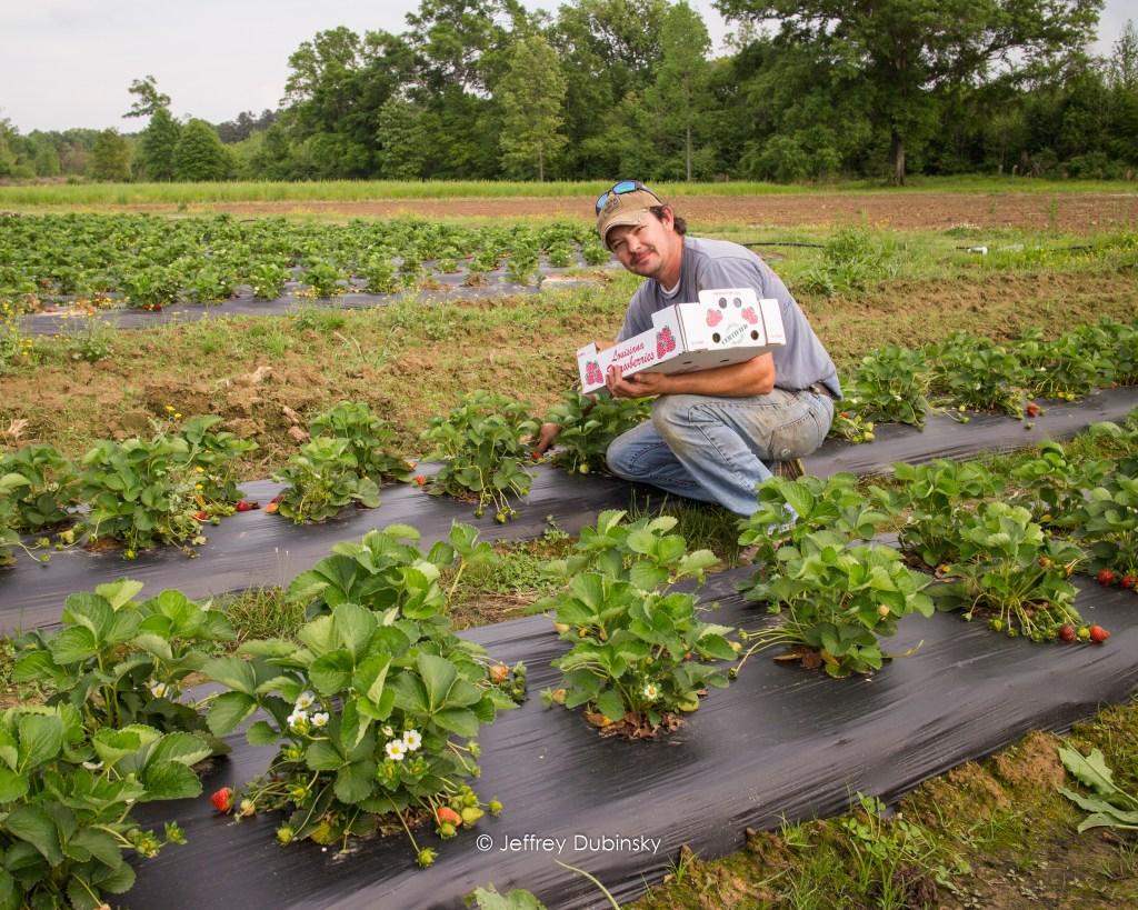 Derek picking strawberries
