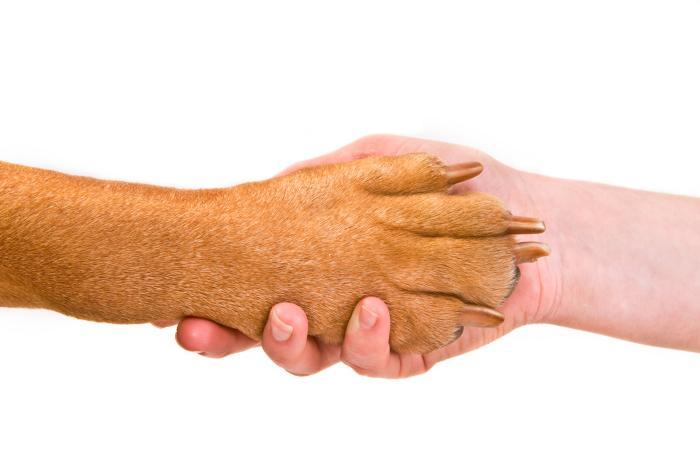 Shaking hands with an animal - in agreement with the environment