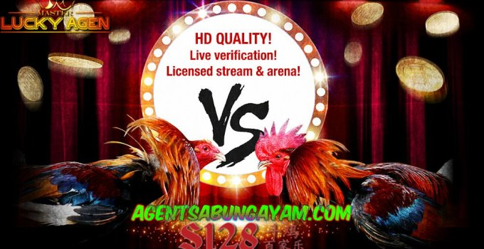Agen S128 Sabung Ayam Live Streaming