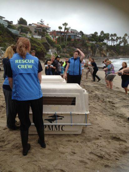 Pacific Marine Mammal sea lion release Orange County California