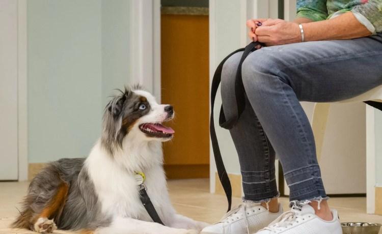My Dog Has C.L.A.S.S.B.A Bachelor's Level 1Canine Life And Social Skill