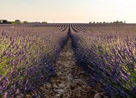 Saal Digital Lavendel_02