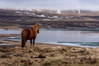 Island - Tag9 (10)