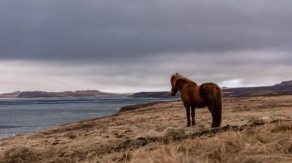 Island - Tag9 (8)