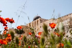 Israel-Jerusalem-Tag10-11-26