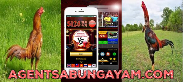 Live Streaming Sabung Ayam Online S128