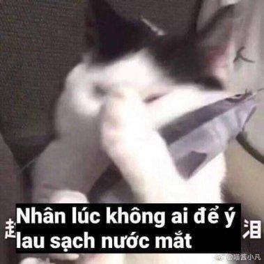 Nhân lúc không ai để ý lau sạch nước mắt - Meme mèo