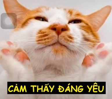 Cảm thấy đáng yêu - Meme Mèo
