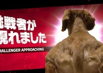 Bờ Vai Của Chú Chó