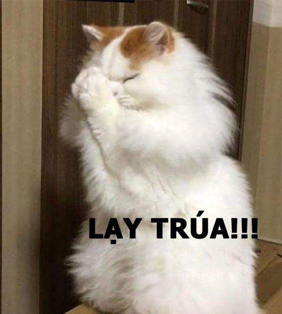 Lạy trúa!!! - Meme Mèo