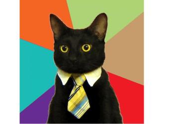 lucloi.vn_Business Cat