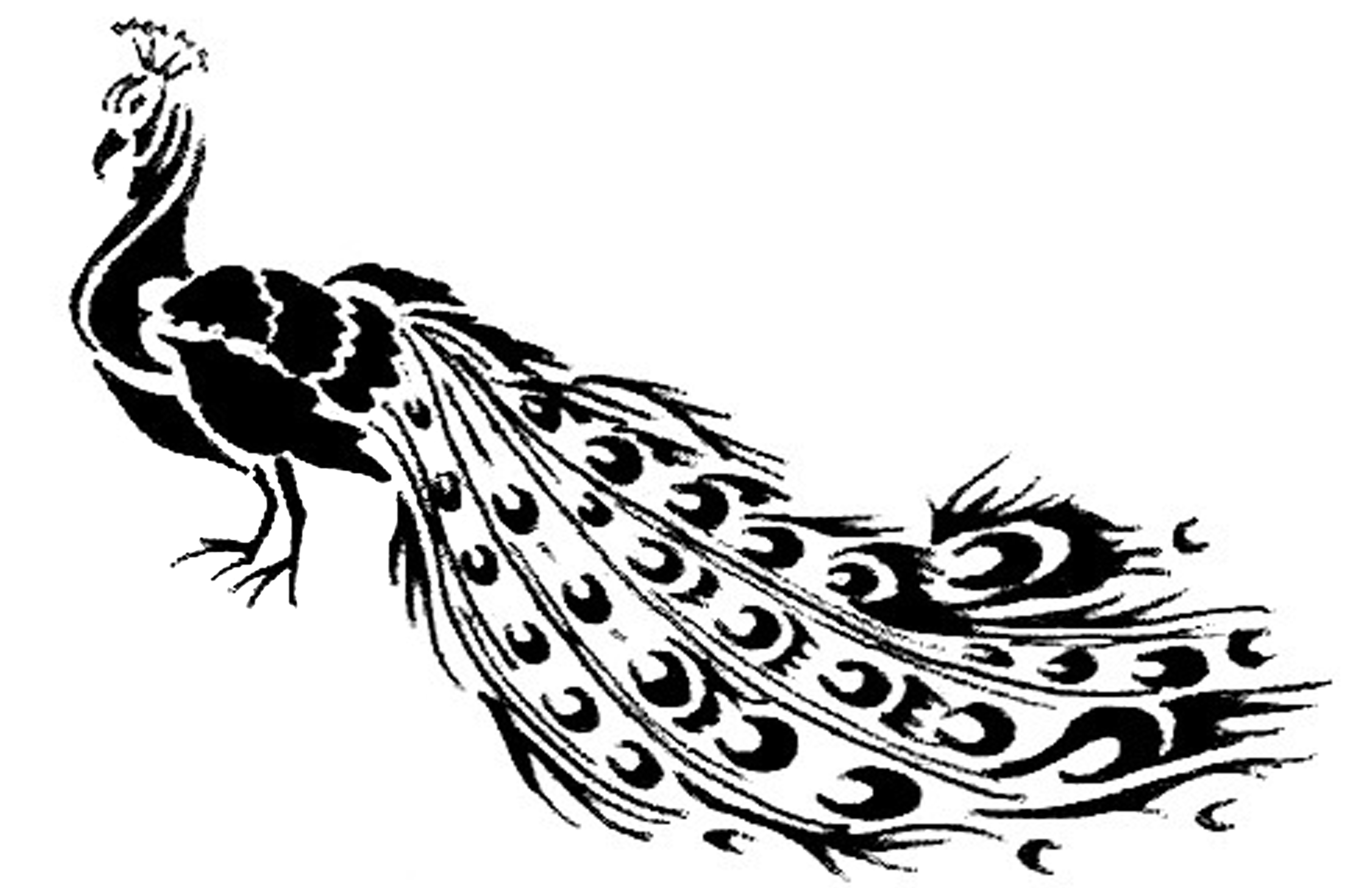 The Year Of The Peacock Part Ii