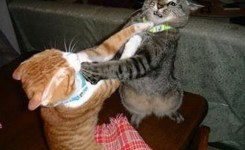 Catfight  E   Funny Cat Fights Hd Funny Pets