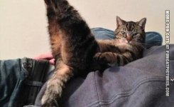 funny-cat-picture-abs-for-the-summer