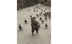Funny Army And Duck Just A Boy Leading His Duck Army Into Battle