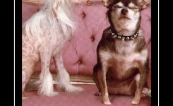 Funny Friday Pictures Friday Funny Marital Bliss Doggies Com Dog Blog