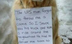 Adorable Dog Spends The Day Riding Around In A Ups Truck Dog Animal And Adorable Dogs