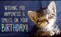 As The Quote Says Description Happy Birthday Pics Funny Cat