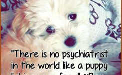 Maltese Dogs Quotes