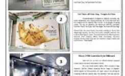 English Worksheets  Funny Adverti Ts  Pages Part