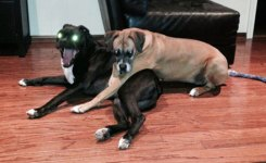 Funny Dogs Sweet Moment Evil Eyes