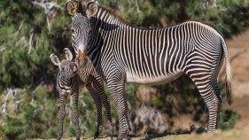 http://animals.sandiegozoo.org/animals/zebra