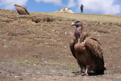 Vultures at a Sky Burial, Litang, Sichuan