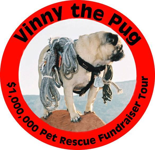 Vinny the Pug Champion Rock Climber (1/4)