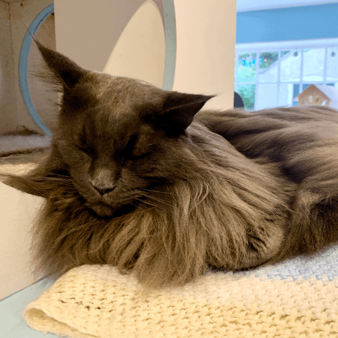 cat cafe in edinburgh