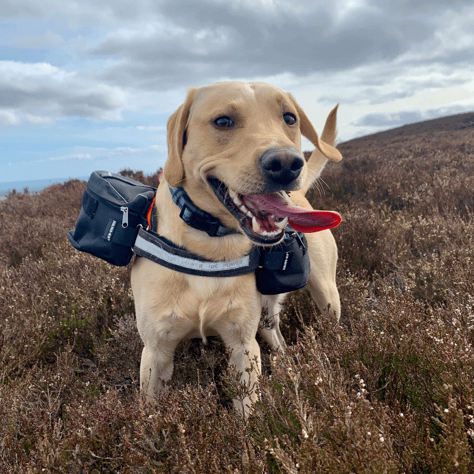 Dog walks in Dundee