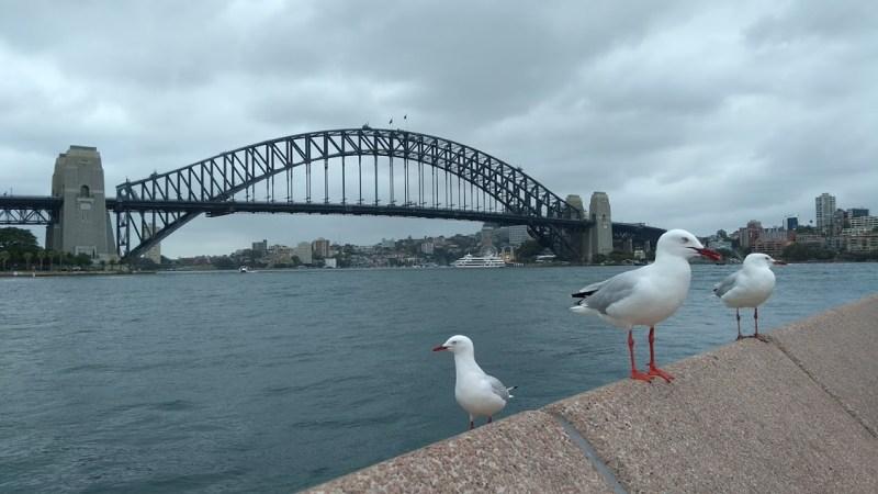 Ponte di Sydney, Sydney Harbour Bridge, con gabbiani
