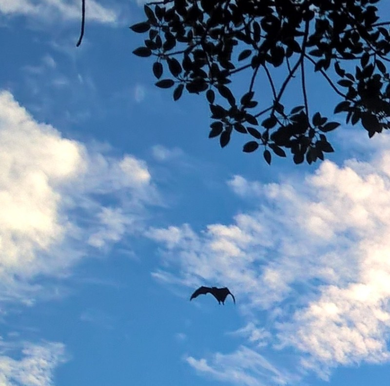 Un pipistrello in cielo
