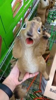 scoiattolo sgomento