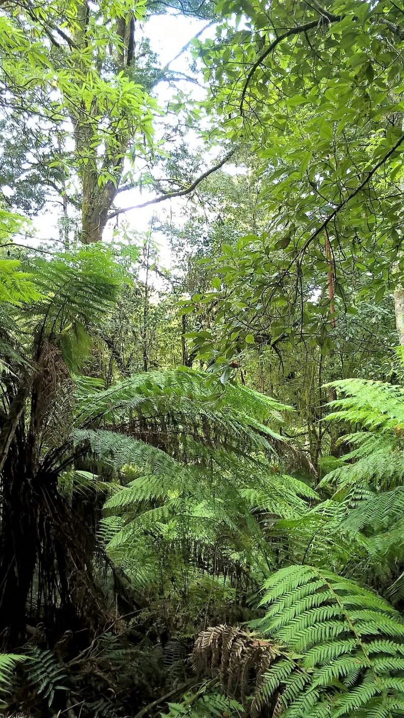Foresta pluviale lungo il Great Ocean Road Tour
