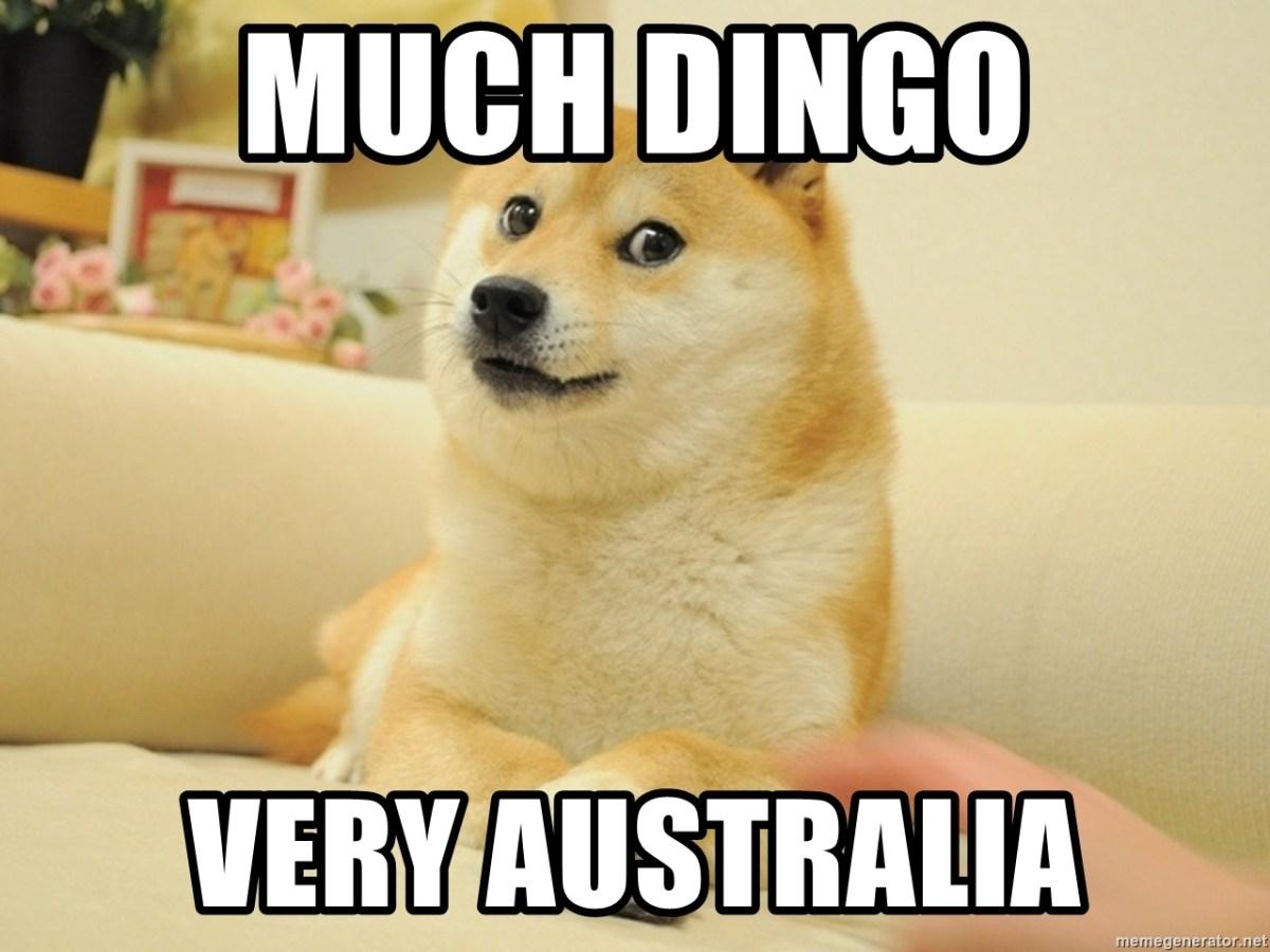 Il vero dingo non deve chiedere mai