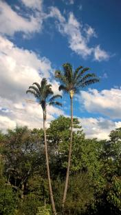 brisbane giardino botanico palme e cielo