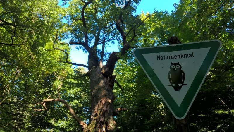 Cartello stradale Naturdenkmal davanti all'albero più vecchio di Berlino